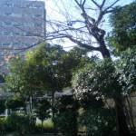 五反田の公園
