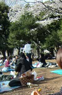 代々木公園で花見